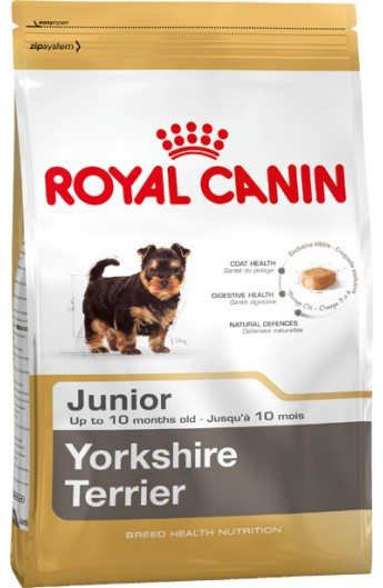 Royal Yorkshire Terrier Junior
