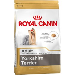 Royal Yorkshire Terrier Adult