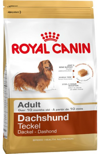 Royal Dachshund Adult
