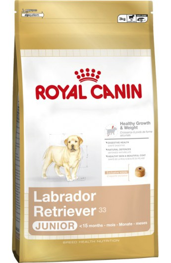 Royal Labrador Retriever Junior