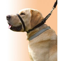 Collare Canny Collar (0CC001)