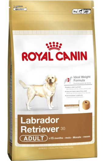 Royal Labrador Retriever Adult