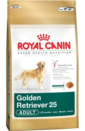 Royal Golden Retriever Adult