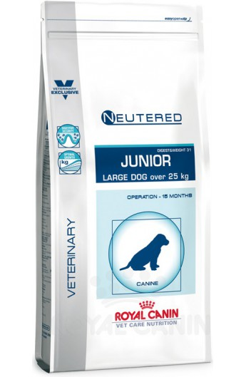 Royal Neutered Junior Large Dog