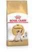 Royal Canin razze Siamese