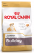Royal Bulldog Junior