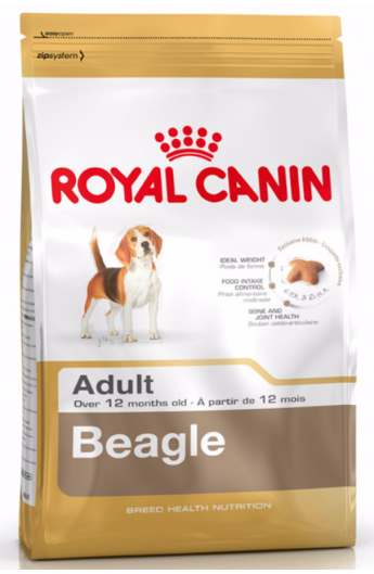 Royal Beagle Adult