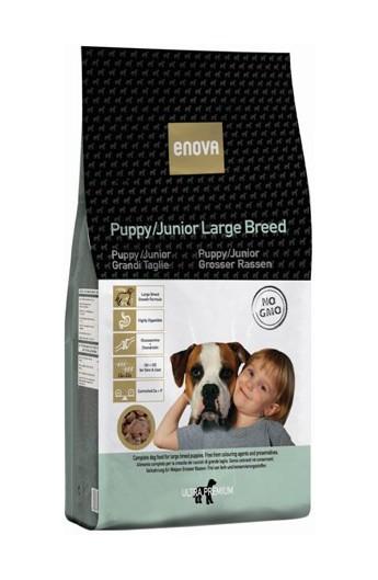Enova - Puppy/Junior Large Breed