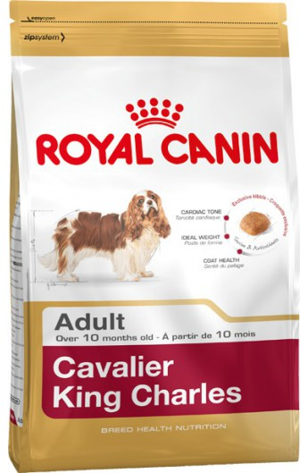 Royal Cavalier King Charles