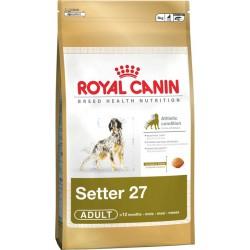 Royal Setter